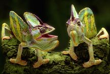 AMAZING LIZARDS! / by Jacqueline Stephens