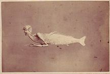 Mermaids (Feejee and otherwise) / by Katie Cowden