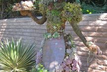 succulents / by Donna Smith