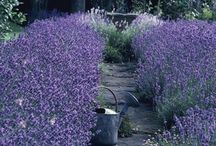 """* JARDIN ~ Lavender * / """"There's a few things I've learned in life: always throw salt over your left shoulder, keep rosemary by your garden gate, plant lavender for good luck, and fall in love whenever you can."""" Alice Hoffman, Practical Magic  / by Karyn G"""