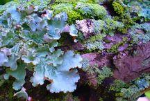 Lichen. / by Cheryl Watson