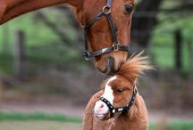 Mini Horses / by Jami Page