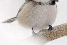 Birds / by Sharon Chapman