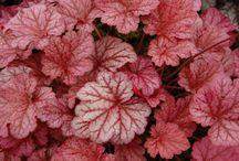 back yard plants / by Sherry Burkman