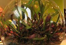 a terrarium!!! <3 / by Melanie Adams