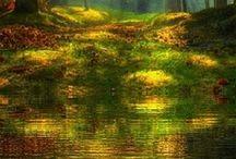 Nature / by Scott Flatt