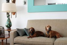 Decorating with Dachshunds / Dog-friendly designs :-) / by Sarah Waddell, Pomeroy House Interiors