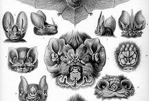 Kunstformen der Natur von Ernst Haeckel / by Space Anomalies