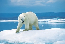 Arctic / by Quark Expeditions