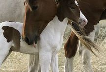 Horses / Horses <3 / by Sage Fairbanks