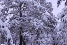 Snow / by Effie Smith