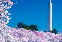 Washington  / by Alicia Pierce