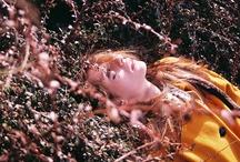going into woods & flora / by Tara-Lynn / good night, day