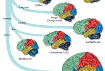 Cerebral business / This board is about the brain, its secrets, its workings and disorders related to it.  / by Lalita Krish.,