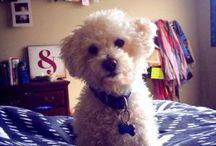 PAWesome Houston Pet Sitters / by DogVacay