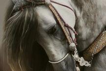 Horses  / by Stephanie Faries