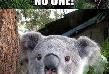 koala / by Joan Ciccarone