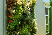 Living Wall / by Melissa Lare Peterson
