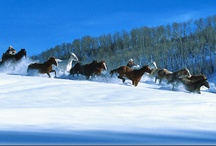 Ski Vacations / Perfect Ski Vacations anywhere there is snow!  Call 888-909-0250 or visit http://www.crownjeweljourneys.com.  / by TRAVEL 2 UNRAVEL
