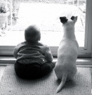Military Pets / by National Military Family Association