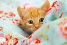 Here kitty... / by Penny Mangas