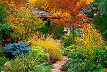 garden / by cora field