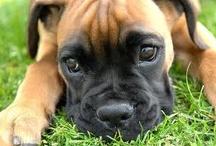 Pup Lovin' / by Kelsie Geohagan