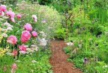 Gardening / by Hilaryesque