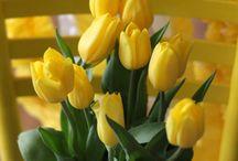 Flowers... / by Tamara Hintz