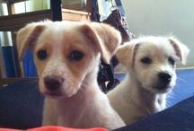 DogGuy / My dog, my life ! / by Mariana Sousa
