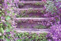 garden / by azar afshari