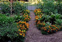 Kitchen Gardens--designs, plants and such... / by Rebecca Nickols