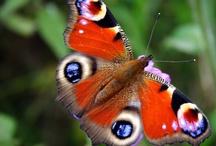 Butterfly / by Melanie McFadden