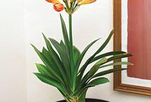 Blooming Houseplants / by White Oak Gardens