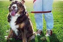 My Doggies / by Tricia Tutwiler