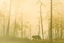 Woodland / by Andrew Keys