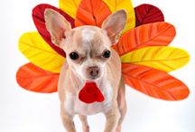 Happy Holidays for Pets / Pets are part of the family, so get them in on the holiday cheer! Learn how to keep your cat or dog safe during Thanksgiving, Christmas, and Hannukahh with tips, tricks, and treats! / by ASPCA