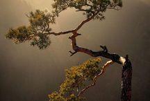Tree and jungle / by deepak doshi