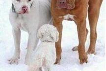Dogs / by Debbie Cronley