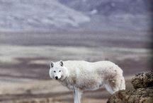 Living wild / by Margaret Covell