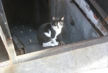 Here kitty kitty / by Felicia Balezentes