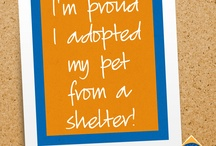 Don't shop. Please adopt. / by Stephanie Osteen