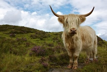 Coos! / by Jill Sutherland