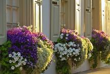 Balcones / Balconadas con flores / by Montse Fdez.