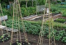 Grow Food Not Lawns / by Betsy Wallace