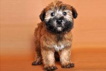 puppy love / by Jill P.