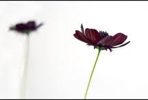 Plants/Flowers/Gardens / by Kathy Dwane