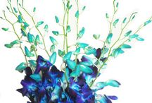 """Wedding Purple and Blue """"Tie Dye Dendrobium Orchid"""" Alisha / For Alisha's wedding... theme built around the Tie Dye Dendrobium Orchid, so colors will be blue and purple. / by Jen Antoniou Weddings and Events"""