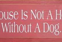 It's a dog thing. / This board is about the beauty, love and kindness that lives within dogs. Dogs make the world happier - the eternal optimist!!!  / by Jodi Dennis