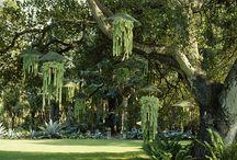 Garden Projects / by Laura Zahody {Zahlicious}